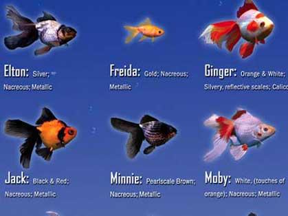Bildschirmschoner premium multipower paket for Bunte goldfische
